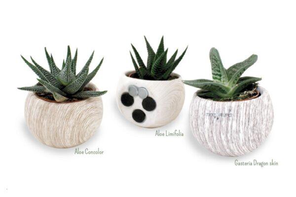 Pot à plante dépolluante